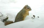 Squirrel in snow JRC